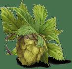 A Hops Flower